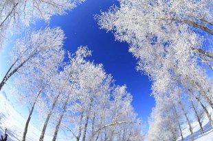 新疆富蕴县的雾凇美景