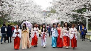 南京:美丽校园樱花节