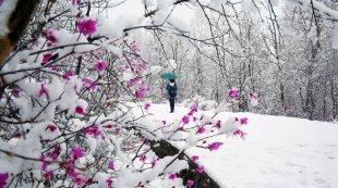 内蒙古大兴安岭五月飞雪