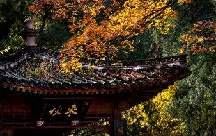 北京香山景区观红叶正
